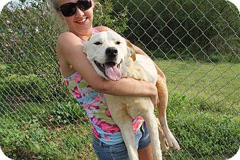 English Setter Mix Dog for adoption in South Dennis, Massachusetts - Henry