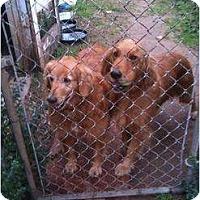Adopt A Pet :: Doc - Russellville, AR