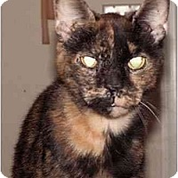 Adopt A Pet :: Patches - Milford, OH