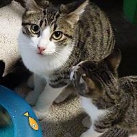 Adopt A Pet :: Sabrina - Round Rock, TX