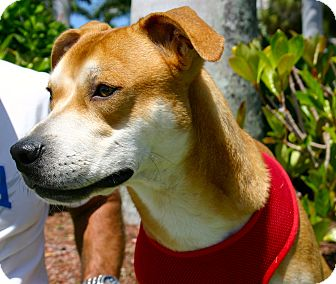 Hound (Unknown Type) Mix Dog for adoption in Ft Myers Beach, Florida - Fun, Fun and more fun!!