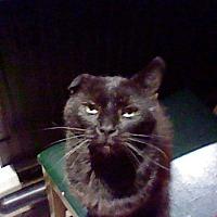 Adopt A Pet :: Pita - Benton, PA