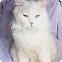 Adopt A Pet :: Percy - Shelton, WA