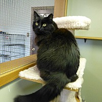 Adopt A Pet :: Madison - Quincy, CA
