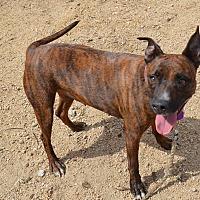 Adopt A Pet :: Zippy - Sherman Oaks, CA