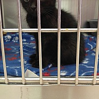 Adopt A Pet :: Nutra - Colonial Heights, VA