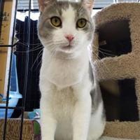 Adopt A Pet :: Markie - Philadelphia, PA