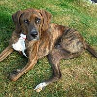 Adopt A Pet :: WINSTON - Elyria, OH
