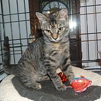 Adopt A Pet :: Tara - Stafford, VA