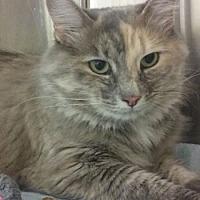 Adopt A Pet :: Margaret - Lunenburg, MA