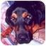 Photo 1 - Rottweiler/German Shepherd Dog Mix Dog for adoption in Austin, Texas - Alexander