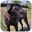 Photo 3 - Terrier (Unknown Type, Small)/Labrador Retriever Mix Dog for adoption in Inman, South Carolina - Lacie