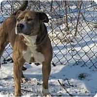 Adopt A Pet :: Diesel - Chicago, IL