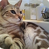 Adopt A Pet :: Scotch and Slater - Dallas, TX