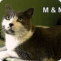 Adopt A Pet :: M&M - Medway, MA