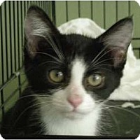 Adopt A Pet :: Sissy-more than a pretty face! - Hurst, TX