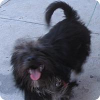 Adopt A Pet :: Roxi - San Ysidro, CA