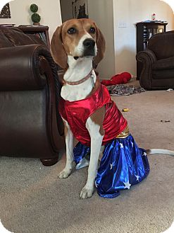 Foxhound Mix Dog for adoption in Apex, North Carolina - Audrey