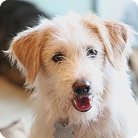 Adopt A Pet :: Maggie May - Norwalk, CT