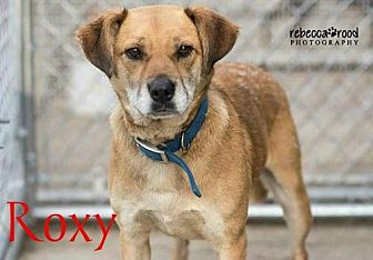 Labrador Retriever Mix Dog for adoption in Crandall, Georgia - Roxy