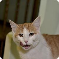 Adopt A Pet :: Beans - Medina, OH