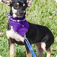 Adopt A Pet :: MISTY - Irvine, CA