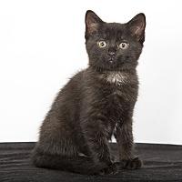 Adopt A Pet :: Lotus - Nashville, TN