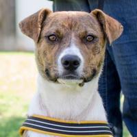 Adopt A Pet :: Murphy - Greenwood, SC