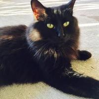 Adopt A Pet :: Jezebel - Boonville, MO