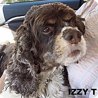 Adopt A Pet :: Izzy T 17087 - Parker, CO