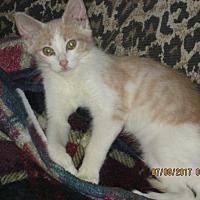 Adopt A Pet :: FADOR - San Diego, CA