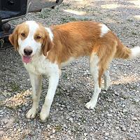Adopt A Pet :: Riley - gorgeous boy - Stamford, CT