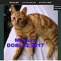 Adopt A Pet :: Mimosa - Chandler, AZ