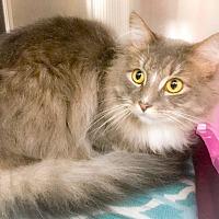 Adopt A Pet :: Franklin - Webster, MA
