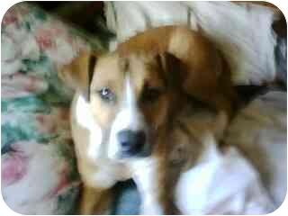 Terrier (Unknown Type, Medium)/Terrier (Unknown Type, Medium) Mix Dog for adoption in Broomfield, Colorado - Trusty