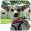 Photo 1 - Chihuahua Dog for adoption in San Clemente, California - MARIA