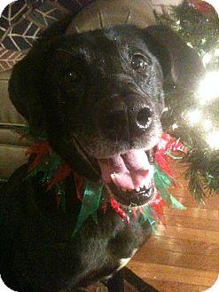 Labrador Retriever Mix Dog for adoption in Huntsville, Alabama - Andy