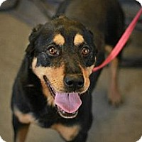 Adopt A Pet :: Roxie - Godfrey, IL