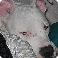 Adopt A Pet :: Casper - Conyers, GA
