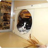 Adopt A Pet :: Mindy - Vails Gate, NY