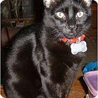 Adopt A Pet :: Gnomers (Gnome-Gnome) - Farmington, AR