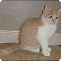 Adopt A Pet :: Fluffy - Modesto, CA