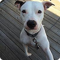 Adopt A Pet :: Oliver - Vernon Hills, IL