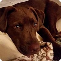 Adopt A Pet :: Charlie (i'm a girl!!) - Staunton, VA