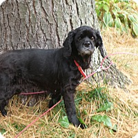 Adopt A Pet :: Sophie - Brant, ON