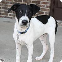 Adopt A Pet :: Luna - Hagerstown, MD