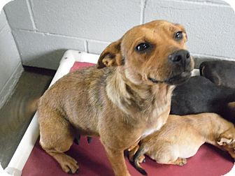 Feist/Hound (Unknown Type) Mix Dog for adoption in Levittown, New York - Pinky