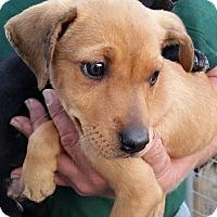 Adopt A Pet :: Valley - Gainesville, FL