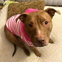 Adopt A Pet :: Coco - Voorhees, NJ