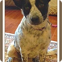 Adopt A Pet :: Oreo - Knoxville, TN